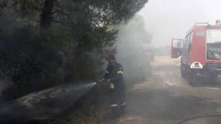 Пламъци обхванаха гората край с. Любичево