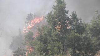 Военни се включиха в борбата с огнената стихия в Родопите