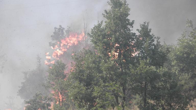 Пожар изпепели 30 дка гора край хисарското село Михилци