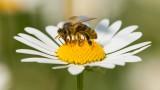 5000 пчелари в Ухан не са хванали COVID-19, според китайско изследване от февруари