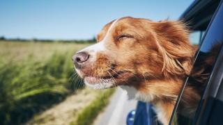 Кучетата в най-добрата им светлина