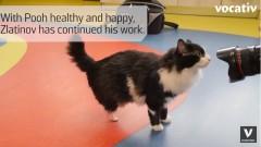 Вижте първата българска бионична котка