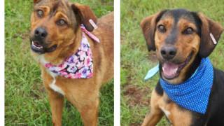 """51 кучета от приюта на  ОП """"Екоравновесие"""" са били  осиновени през септември"""