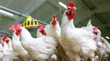 Путин ще осигурява изхранването на Русия, възраждайки съветското супер пиле