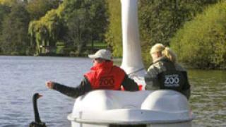 Лебед се влюби във водно колело