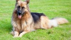 """Кучетата и конете на армията и полицията в Румъния получават """"пенсия"""""""