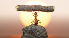 Какво не знаехме за мозъка на мравките