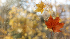 Дъжд във вторник