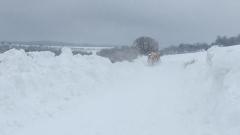 1 фирма с един снегорин чисти снега в 5 варненски общини