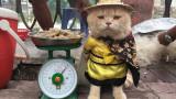 Котката, която се казва Куче и продава риба