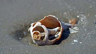 3 тона мазут почистиха от плажа в Бургас