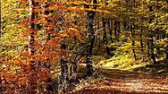 Започва есента
