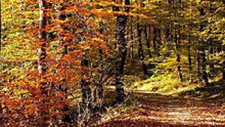 Проверка на всички заменки обеща новия шеф на горите