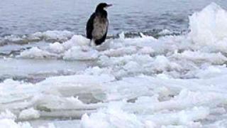 Спасиха с вертолет 9 рибари върху леден блок