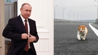 Котарак изпреварил Путин по Кримския мост