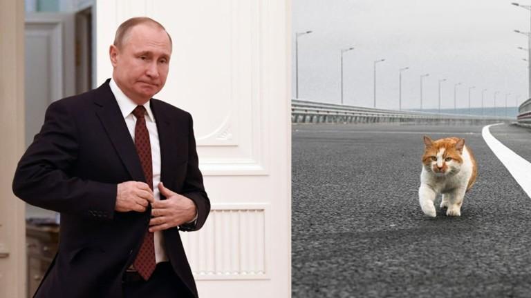 Котаракът Мостик първи е преминал по новопостроения мост за Крим.