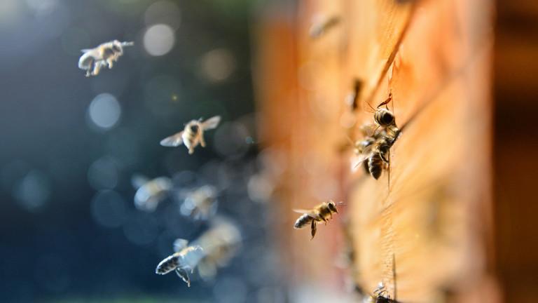 Масово измиране на пчели в Плевенско заради незаконно пръскане