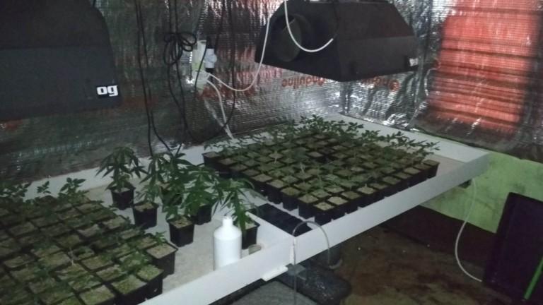 Разбиха наркооранжерия в мотел край язовир Искър. Около 13.30 часа