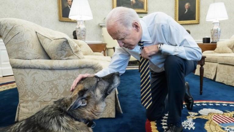 Краткият мандат на кучетата на Байдън