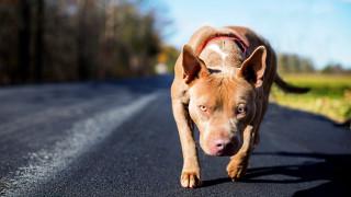 """Кучето трябва добре да знае командата """"Не"""", съветват специалисти"""