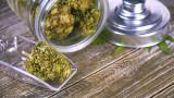Бизнесът с марихуана донесе над $1 милиард приходи на Колорадо