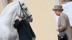 Спортът, който е донесъл над $9 милиона на Кралица Елизабет II