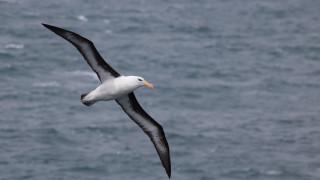 Албатроси полицаи с радари борят незаконния улов