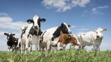 Може ли месото да спаси планетата