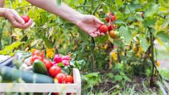 Драстичен спад на площите за отглеждане на зеленчуци у нас