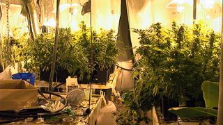 Разкриха домашна наркоградина в столицата