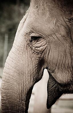 Слоница в австралийски цирк премаза дресьора си