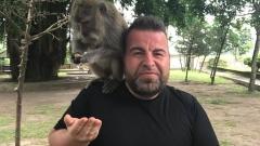 Маймуни налазиха Роро в Бали (СНИМКИ)