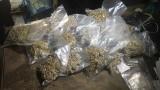 Хванаха митничар и двама бивши полицаи, отглеждали марихуана