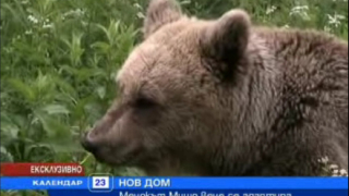 """""""Нова"""" си кръсти мечок"""