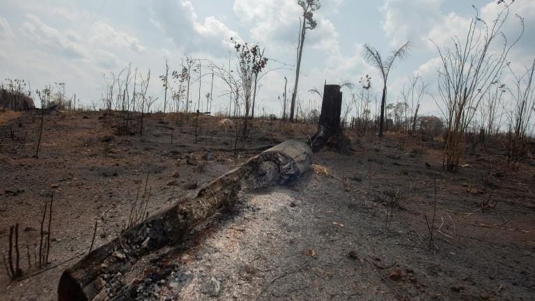 Военни самолети са били изпратени да гасят горящите тропически гори