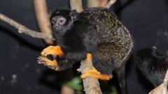 Софийският зоопарк с нов вид маймунки