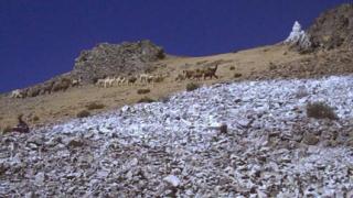 Стотици умряха от измръзване в Перу
