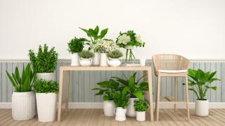 Стайни растения за мързеливци