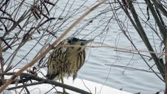 Много изчезващи видове птици зимуват в България