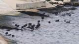 Откриха тялото на второто дете в морето край Варна