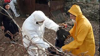 """Птичият грип у нас не е от """"щама убиец"""" H5N1"""