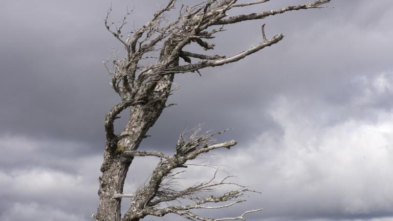 Оранжев код за опасен вятър в 17 области