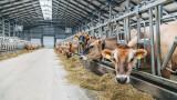 Производствените цени в растениевъдството падат, в животновъдството - скачат