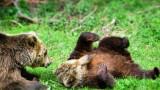 Уикенд в Парка на танцуващите мечки