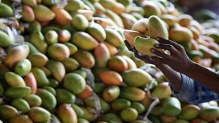 Филипините залети от манго