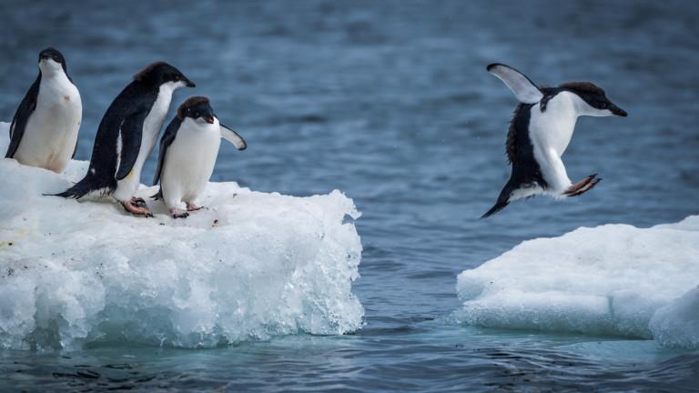 Представете си Антарктика като огромна снежна пустиня. Не само това