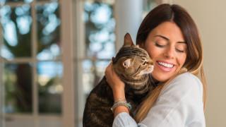 Как ни възприемат котките