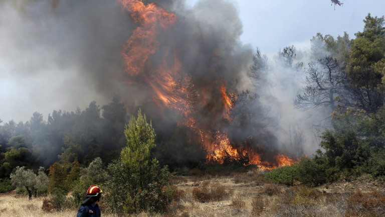 Запали се иглолистна гора в Родопите