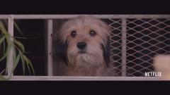 Любимото куче Бенджи се завръща