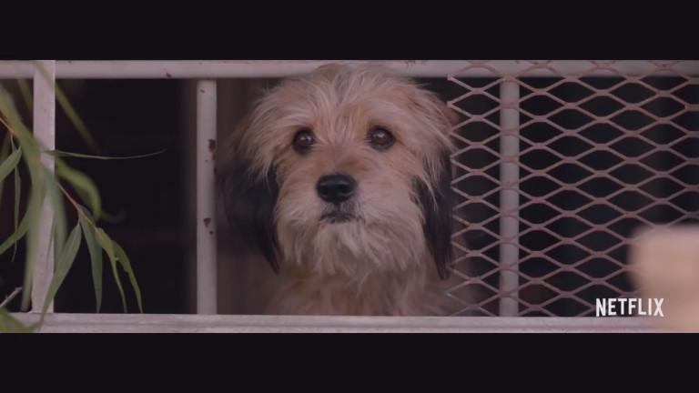 Филмите с животни, по-специално с кучета, са много. Те винаги